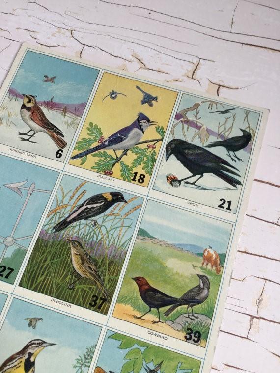 bird flashcard